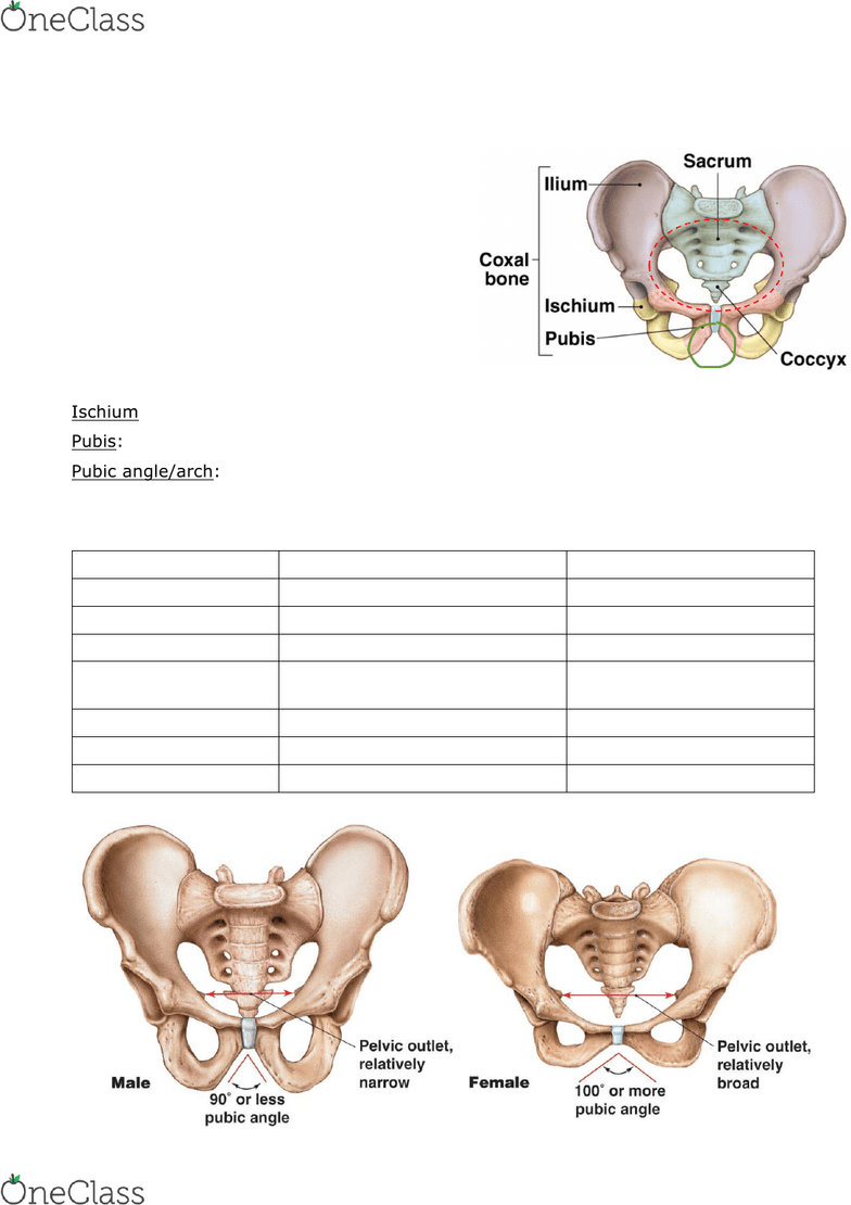 hight resolution of urinary system and pelvis