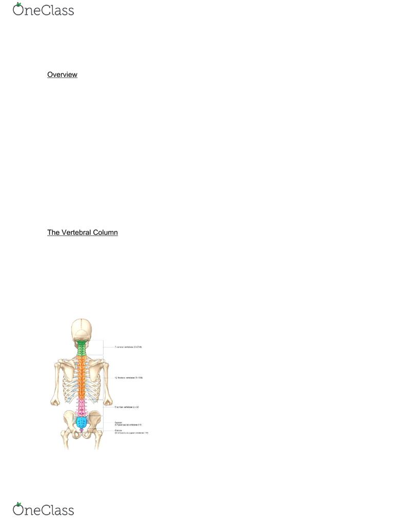 hight resolution of vertebral column back 2 4