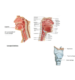 anat30008 lecture notes lecture 31 hyoid bone lateral cricoarytenoid muscle vocal process [ 784 x 1130 Pixel ]