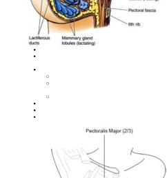 sits on fascia superficial to pectoralis major [ 671 x 1677 Pixel ]