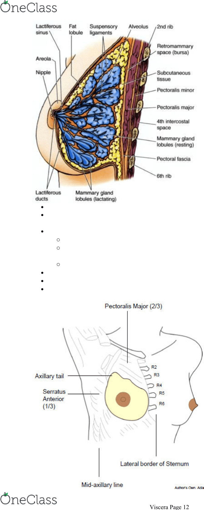 hight resolution of sits on fascia superficial to pectoralis major