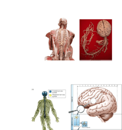 lecture 2 brain anatomy [ 784 x 1336 Pixel ]