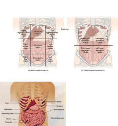 nurs 202 lecture notes 2018 lecture 4 nocturia epigastrium diagram of epigastrium [ 784 x 1166 Pixel ]