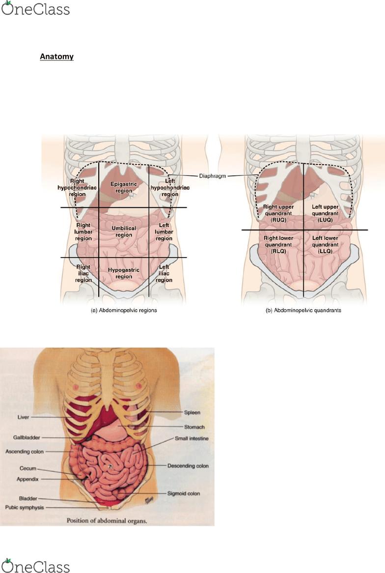hight resolution of nurs 202 lecture notes 2018 lecture 4 nocturia epigastrium diagram of epigastrium