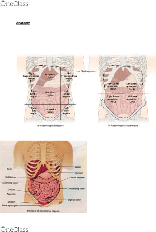 small resolution of nurs 202 lecture notes 2018 lecture 4 nocturia epigastrium diagram of epigastrium