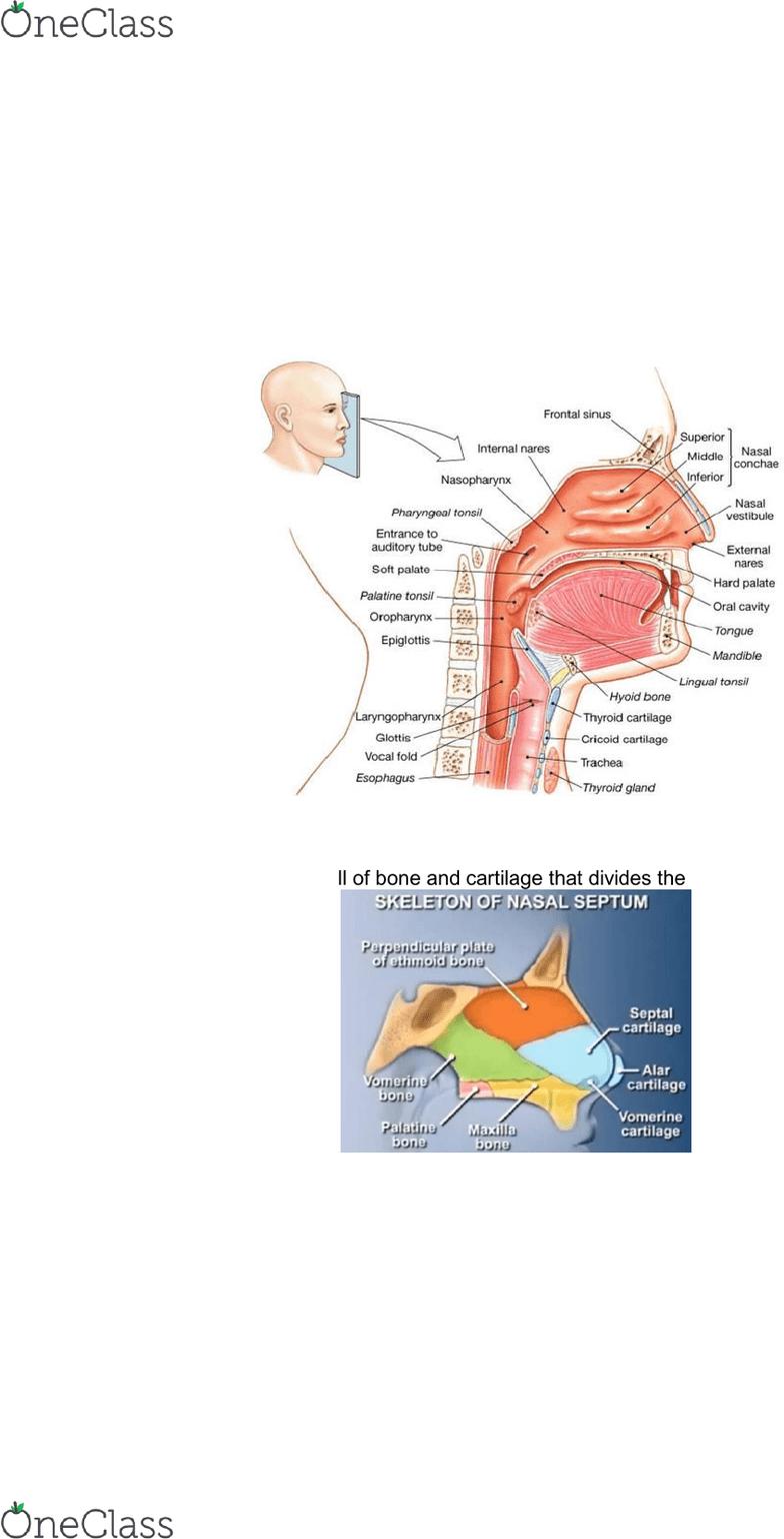 hight resolution of biom2020 respiratory system