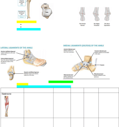 movements of the foot and ankle tibia  [ 784 x 1127 Pixel ]
