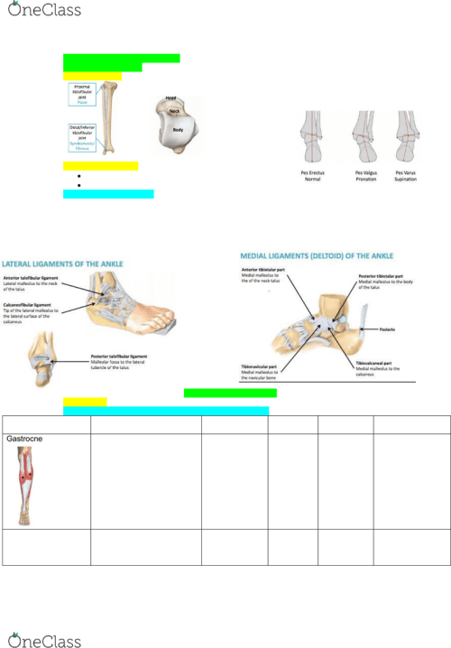 small resolution of movements of the foot and ankle tibia