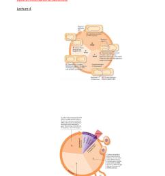 cycle 2 outcomes [ 784 x 1174 Pixel ]