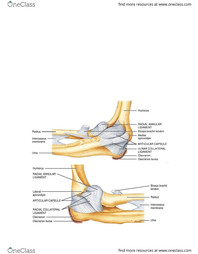 hight resolution of elbow and radial ulnar