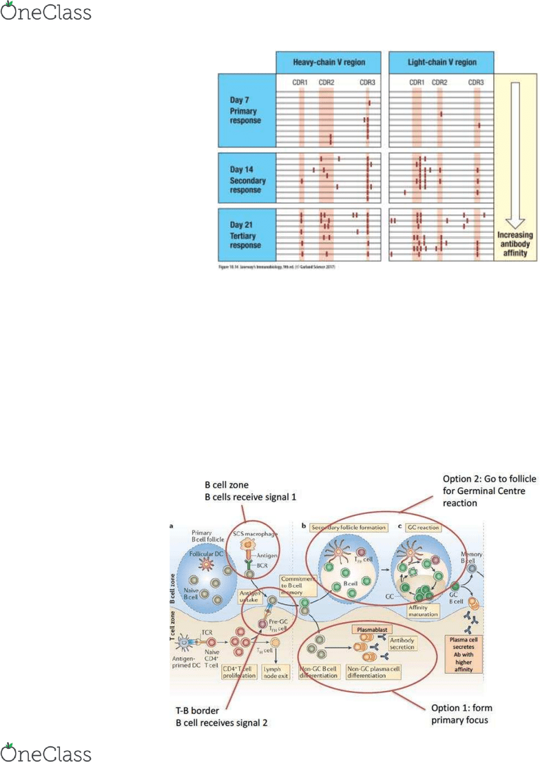 hight resolution of mimm 214 lecture notes lecture 29 immunoglobulin class switching cytidine deaminase affinity maturation