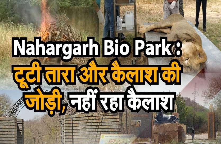 Nahargarh Bio Park: The pair of Tara and Kailash broke up