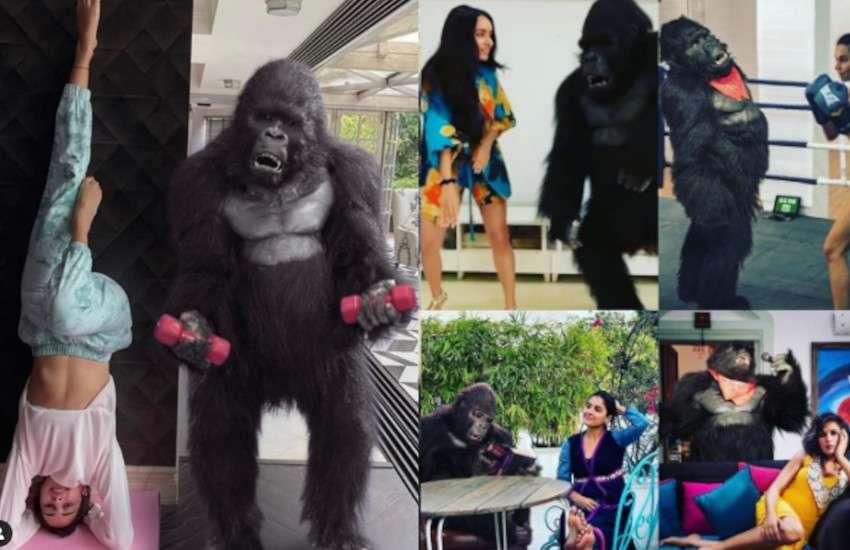 hello_charlie_gorilla.jpg