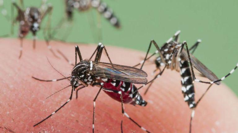 क्यों कम इम्युनिटी वाले लोगों को मच्छरों से ज्यादा सावधान रहना चाहिए