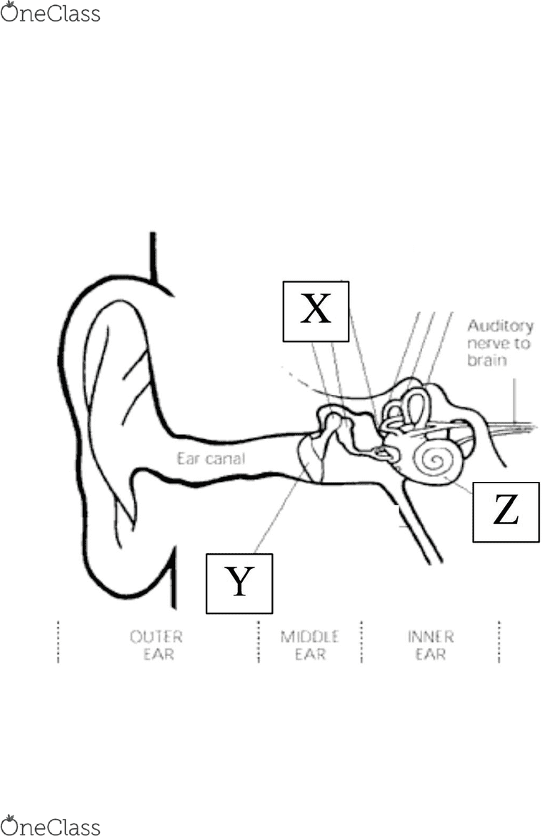 medium resolution of cochlea diagram quiz wiring library rh 49 einheitmitte de cochlea structure inner ear diagram