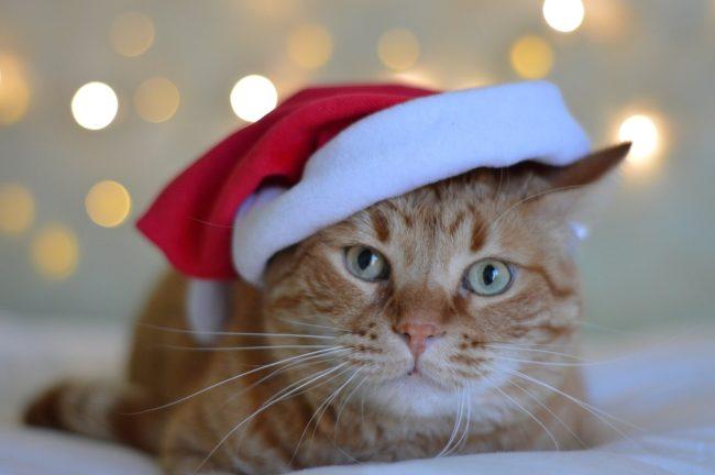 گربه در کلاه سال نو