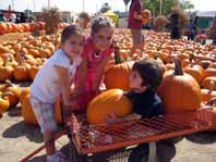 forneris farms fall harvest fest
