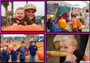 forneris farms harvest fest