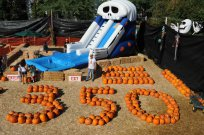 mr bones pumpkin patch