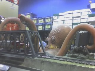 Fry's octopus miniature