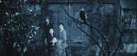 black-cat_crow1