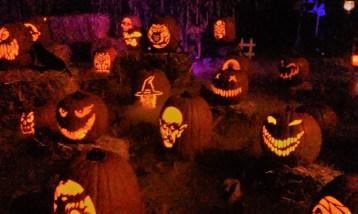 Wicked Pumpkin Hollow 2017 Jack o' Lanterns 7 sahara