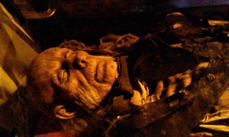 Hollywood Museum Monsters Mummies and Mayhem corpse closeup