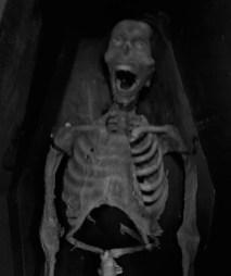 Mystic Museum Camp Horror photographs