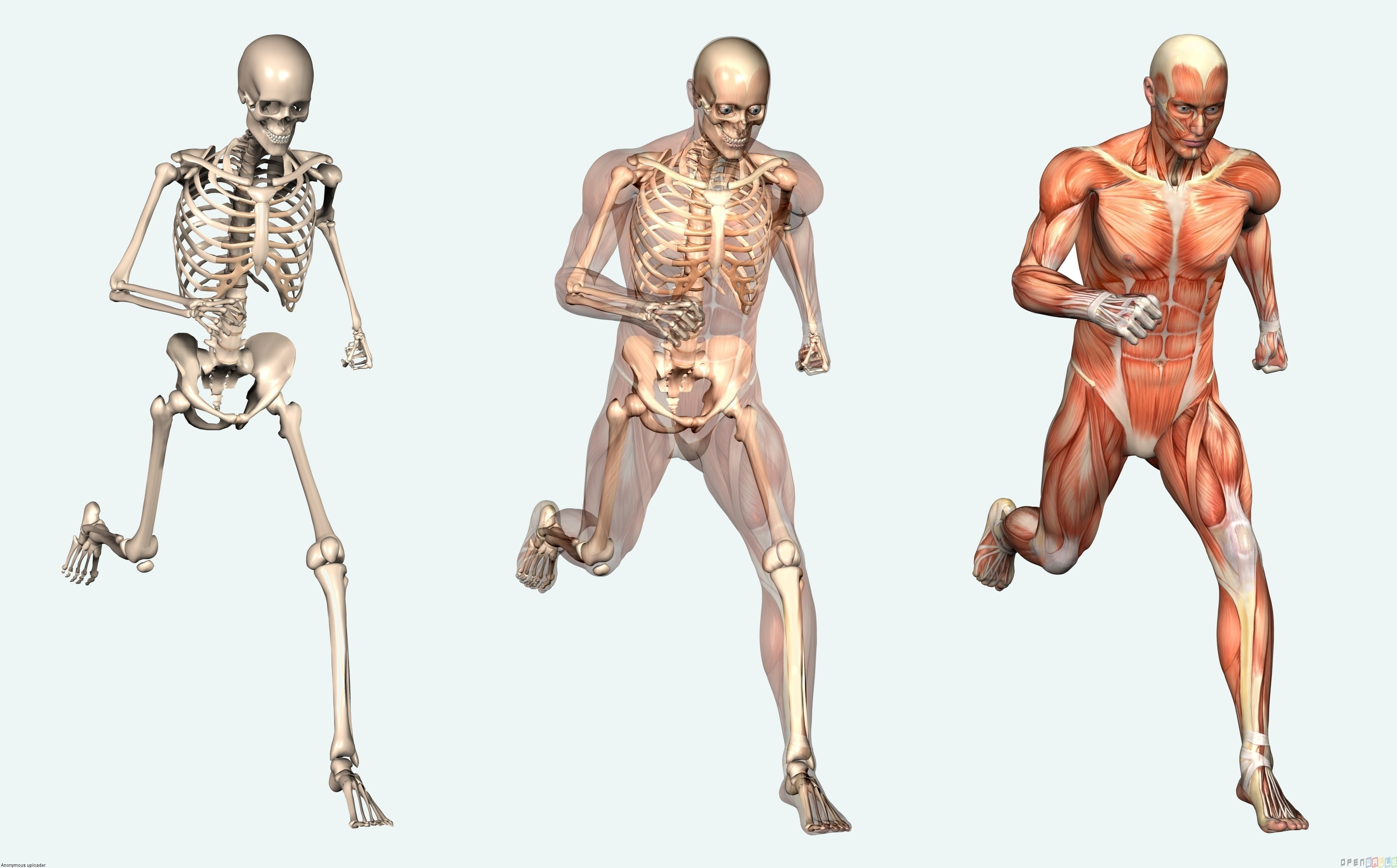 Curiosidades del cuerpo humano que quizá desconocías | Autofarma