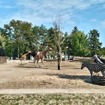 zoo (61)