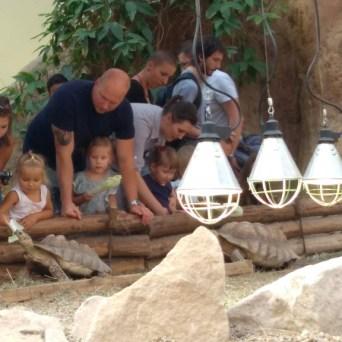 zoo (74)
