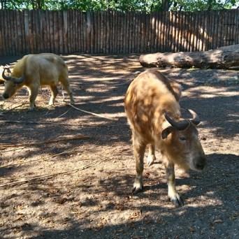 zoo (76)