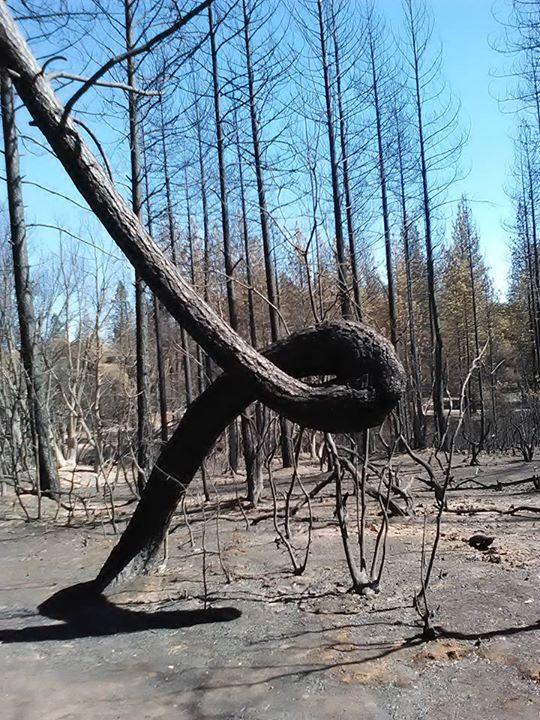Butte Fire Reality The Ongoing Struggle Of Survival