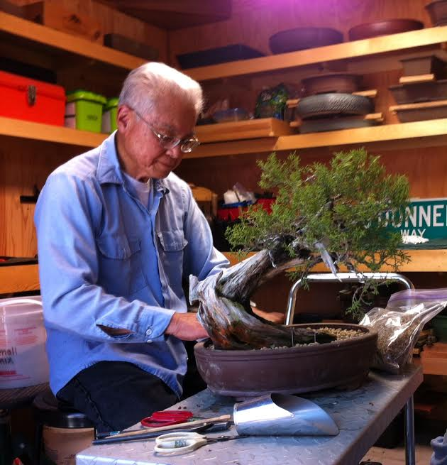 Mother Lode Bonsai Club  Offers Shohin Workshop On Oct. 1st