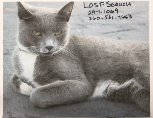 Sequoia Is Missing, Have You Seen Her?