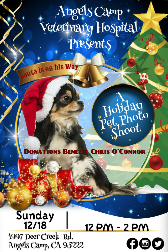 A Holiday Pet Photo Shoot Benefit