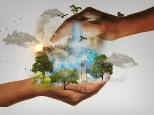 What Is The Role of Humans In Protecting Our Environment