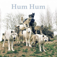 Hum Hum – Blueberries (2019) Mp3