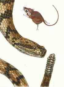 Snake/Mouse