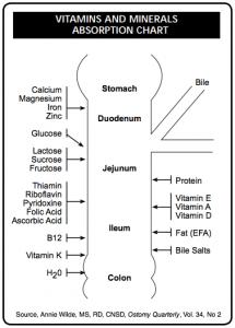 Bowel Vitamins & Minerals Absorption Chart