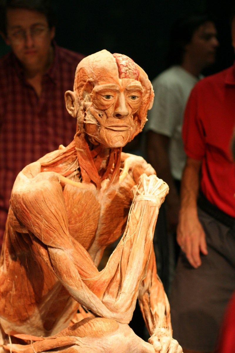 Body Worlds Art Of Preservation Newbie Science