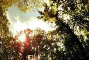 Outdoor imagery like Maudslay State Park