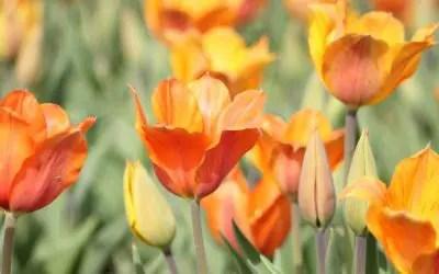 As flowers bloom, so do activities in Newburyport