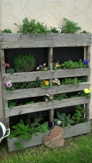 Pallets From the Harte by our gardening expert Debbie Harte!