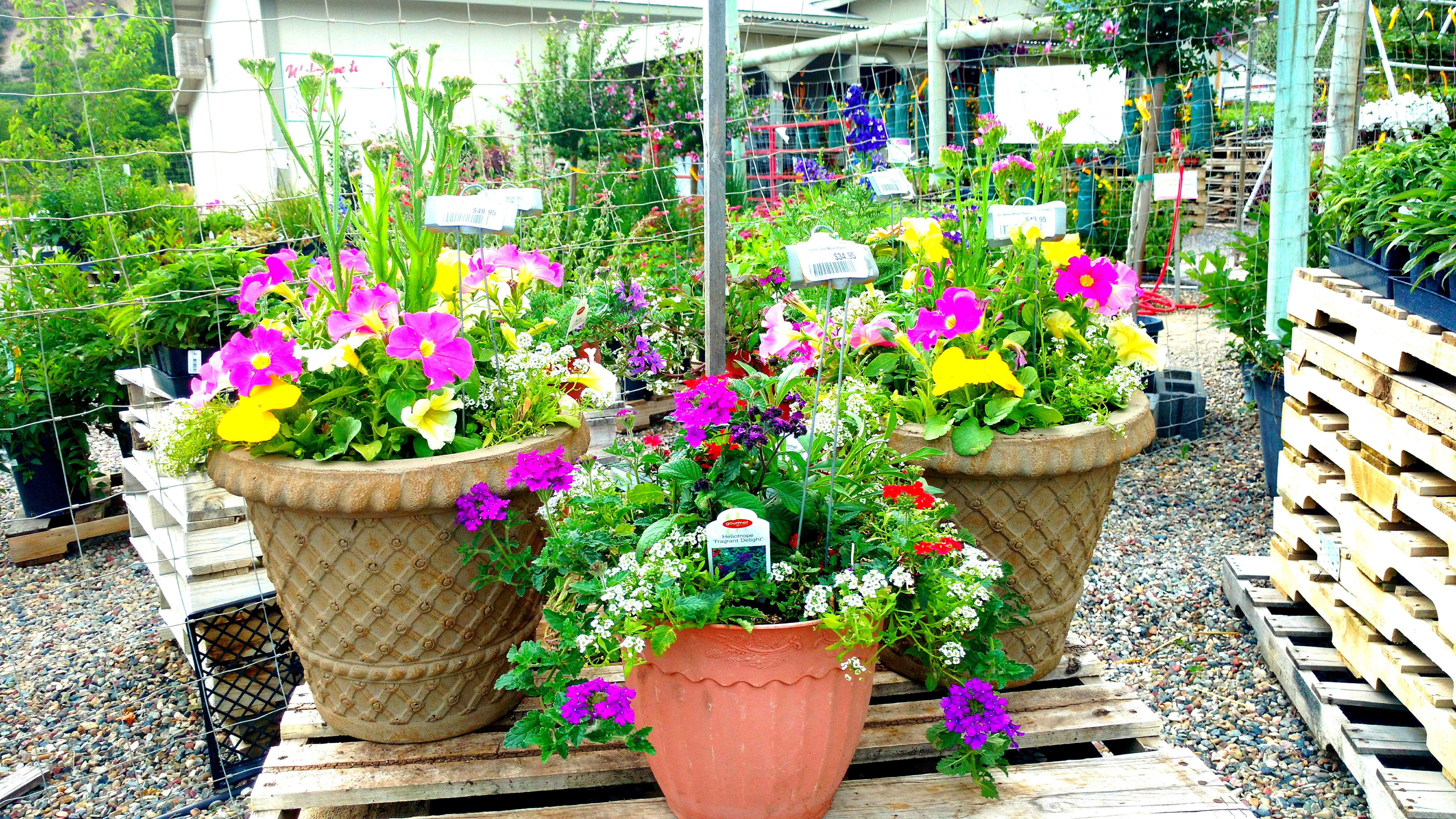 Colorful Potted Flowers