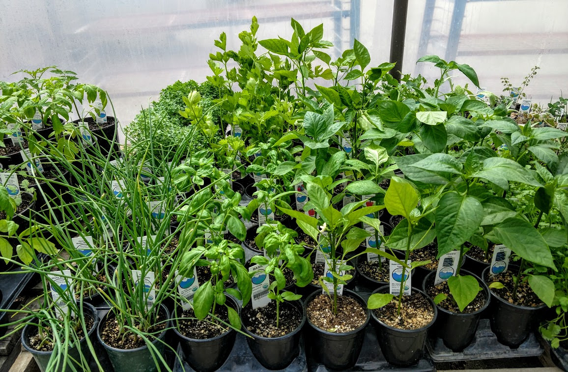 Produce Plants
