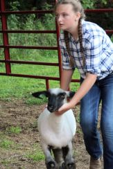 Kylee Gilreath placed second in the beef non-owner showmanship class, and third in the sheep non-owner showmanship class.