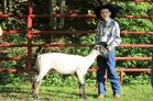 Simon Weyant was second in his commercial ewe class and second in his market lamb class. He also placed second in the intermediate sheep showmanship class. Simon tried his hand in showing goats and placed third in the non-owner showmanship class.