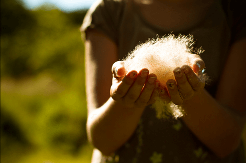 A child holds a pile of sunshine-drenched milkweed seeds in her hands.