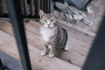 South Side Stray Strut: What's Up with the Cats of Pilsen?